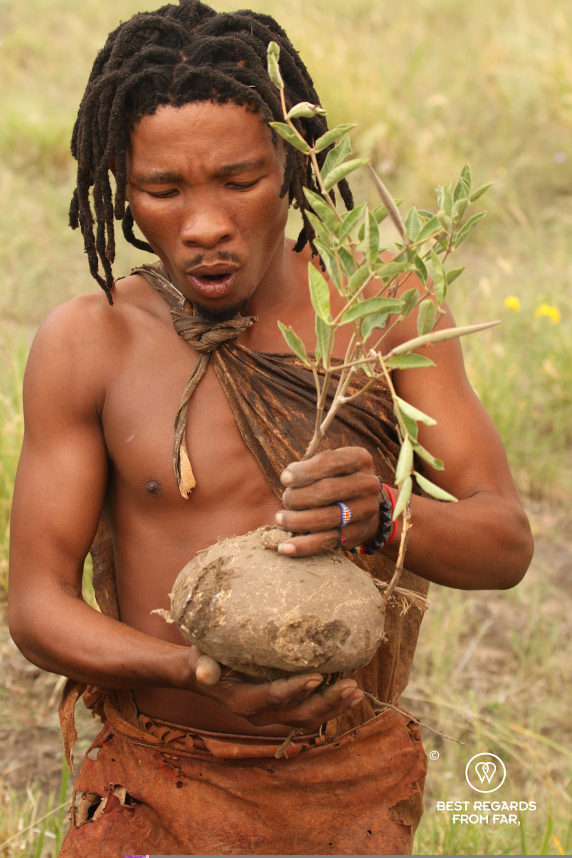 San man collecting a water plant in Botswana.