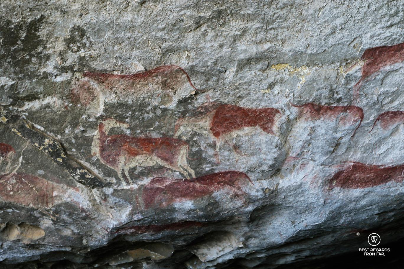 Bushmen rock art representing elands, Drakensberg, South Africa