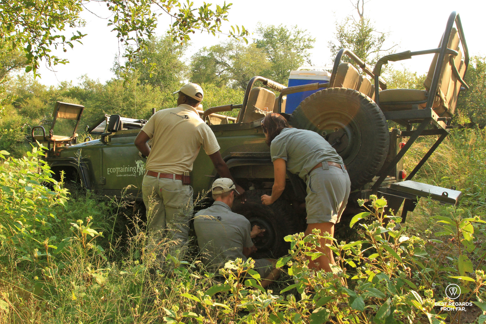 3 EcoTraining instructors changing a tyre of the Land Rover in the bush while checking on lions