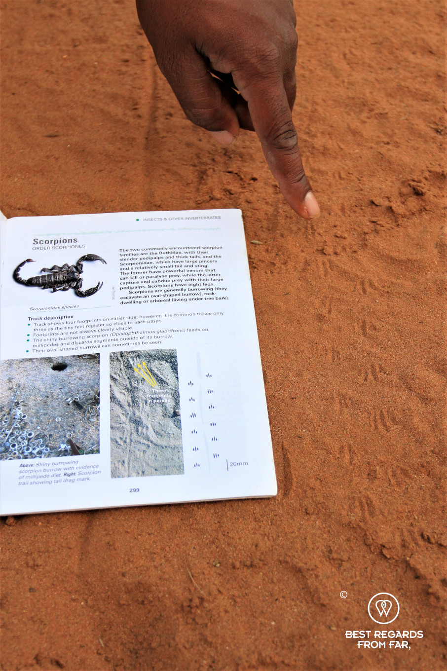 Instructor Norman Chauke's hand pointing at a scorpion track in red sand
