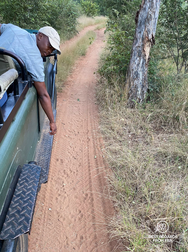 Instructor Norman Chauke following lion tracks in the game drive vehicle