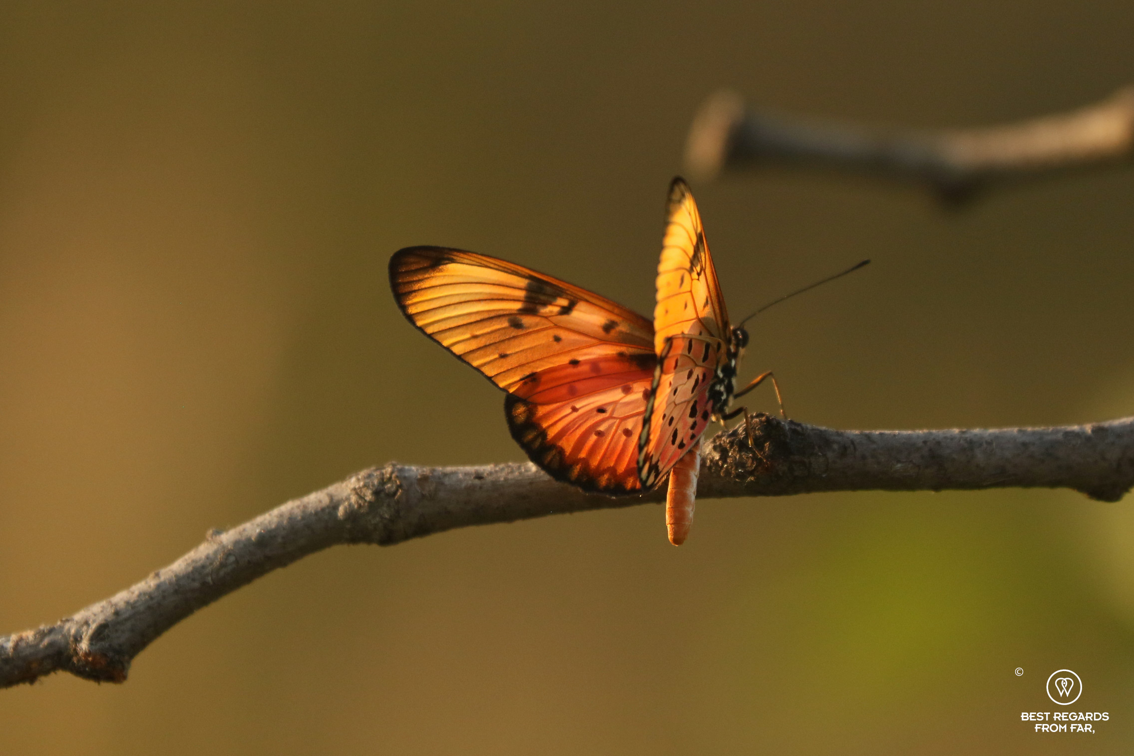 Orange butterfly in the sun light on a dead branch