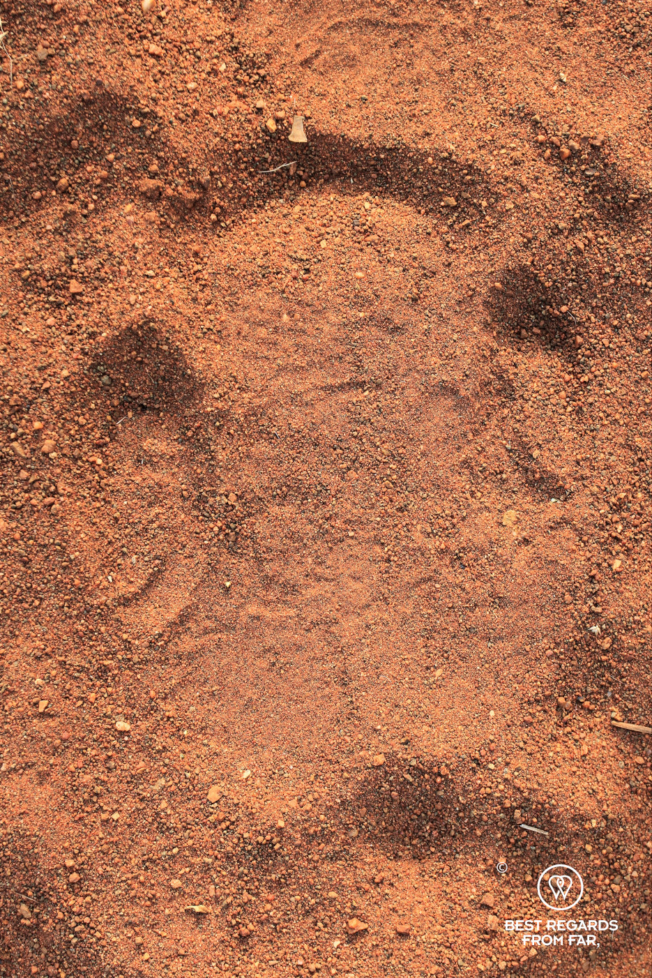 White rhino track in the red sand