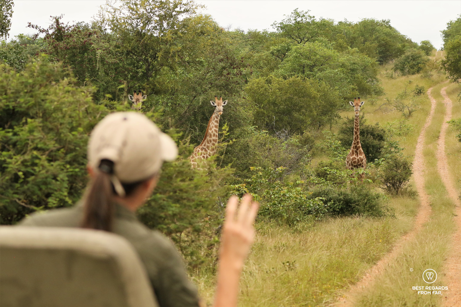 Spotting 3 giraffes from the tracker seat