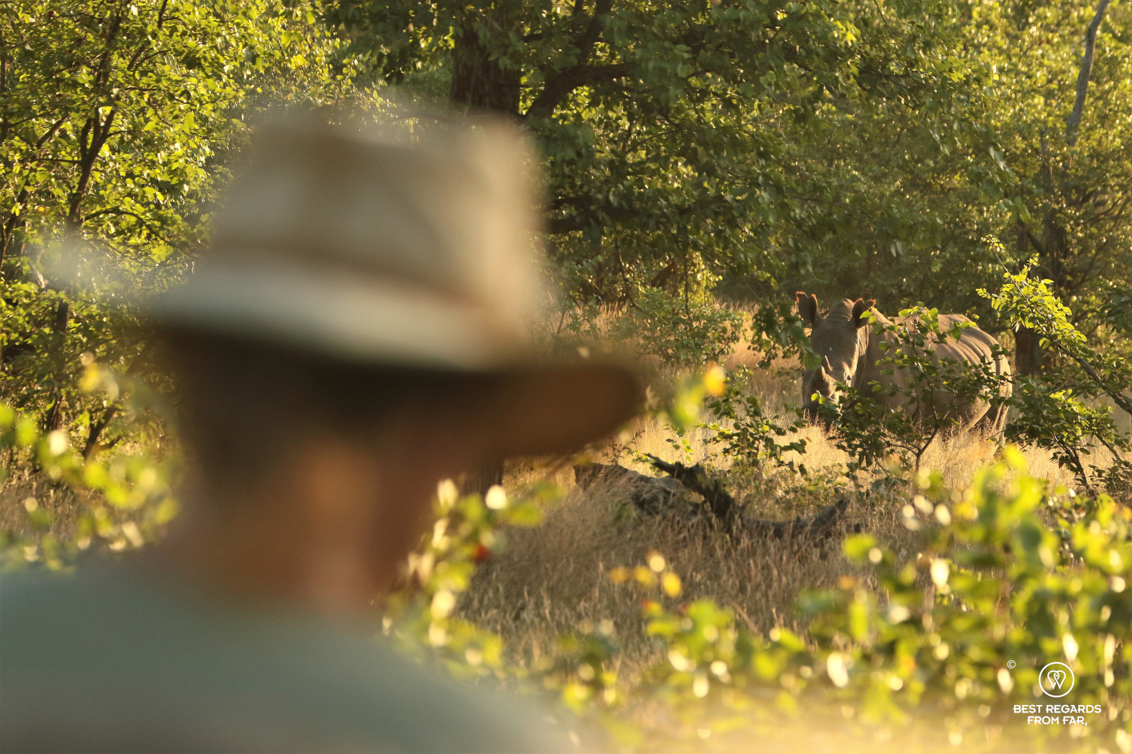 Safari-goer in the foreground close to a white rhino in the African bush