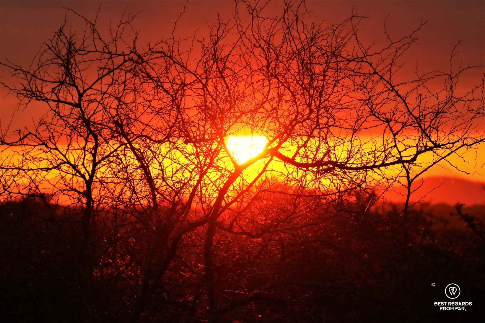 Sunset with a bright red sky through a tree in the African bush