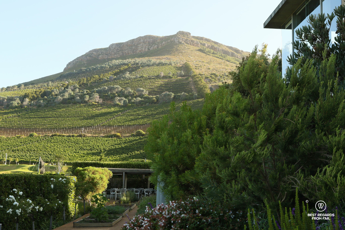 View on the vineyards and the garden at sunset, the Chefs Warehouse Beau Constantia