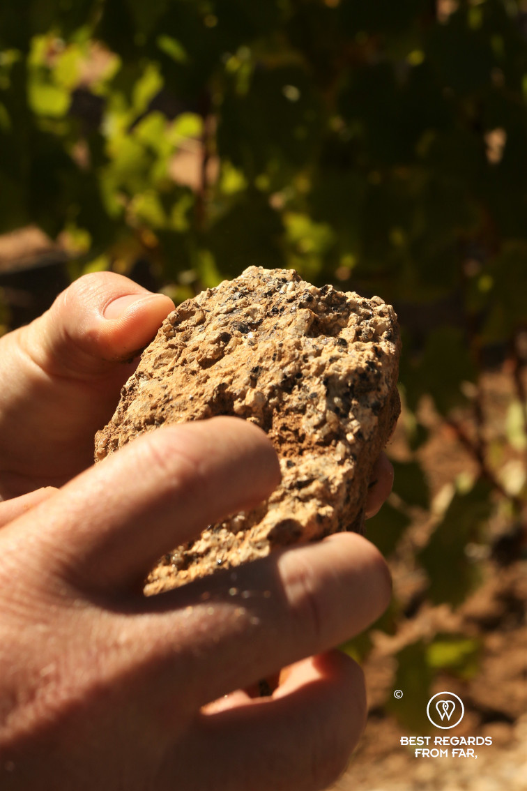 Checking the soil at Constantia Royale vineyard, Constantia wine route, Cape Town