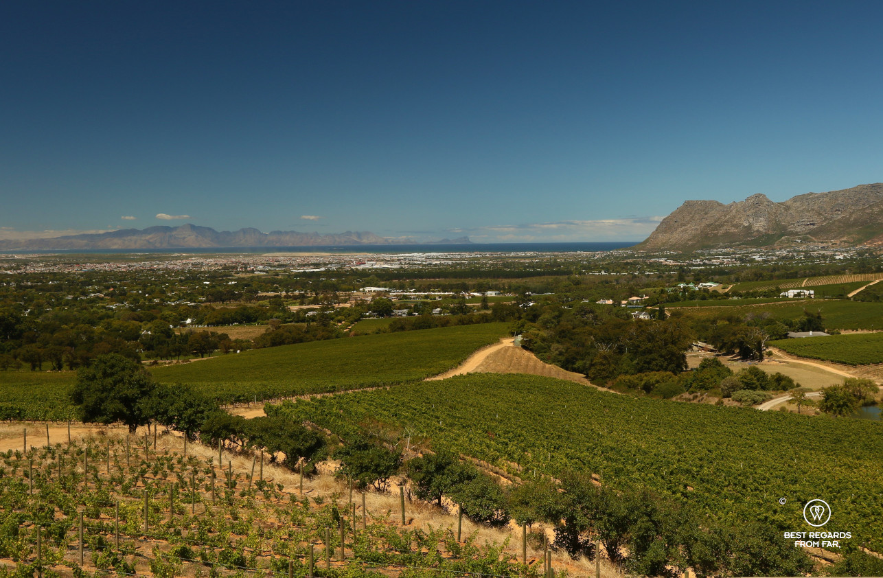 Klein Constantia vineyard with the view on False Bay, Constantia wine route, Cape Town