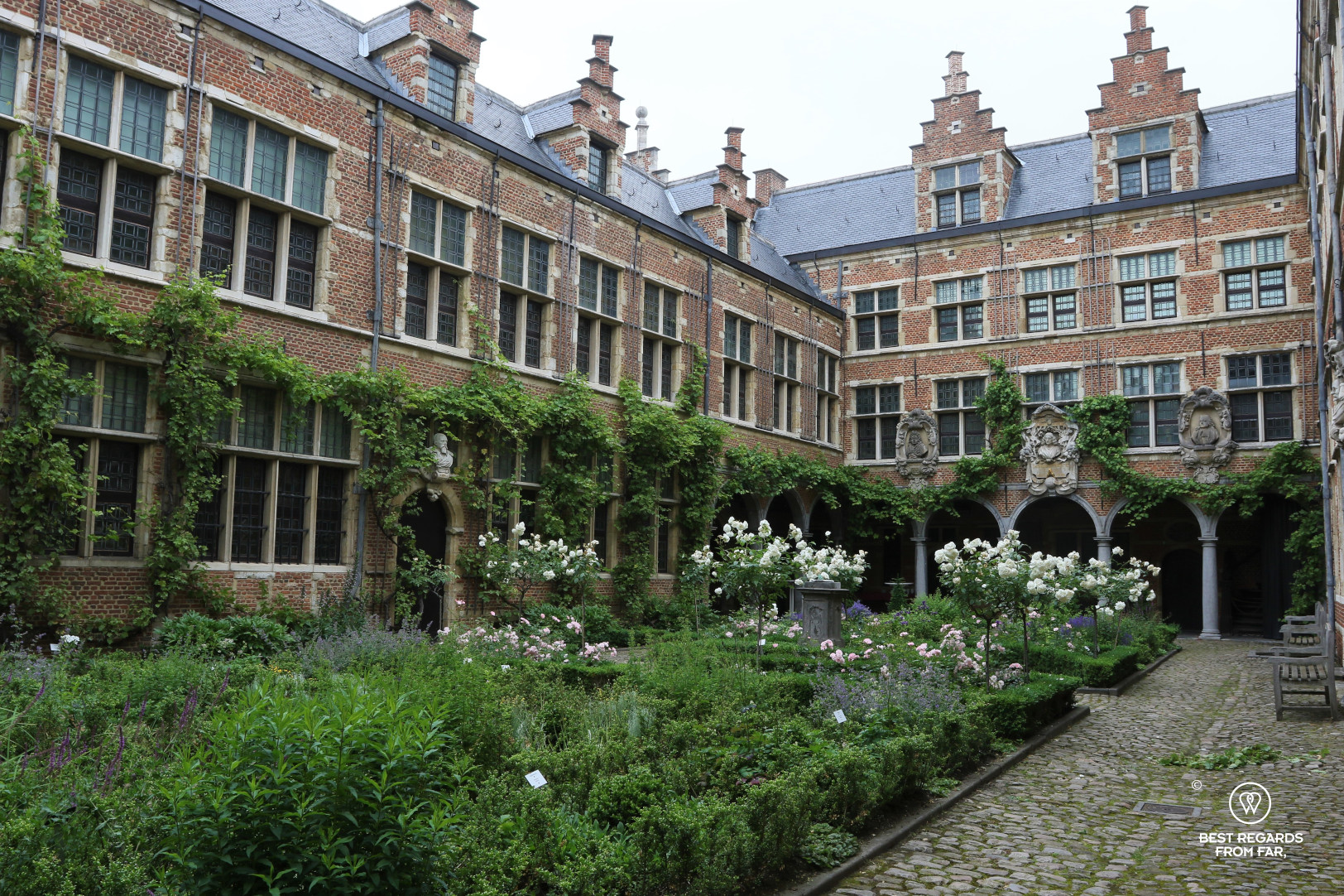 Courtyard with white roses at the Plantin Moretus Museum, Antwerp