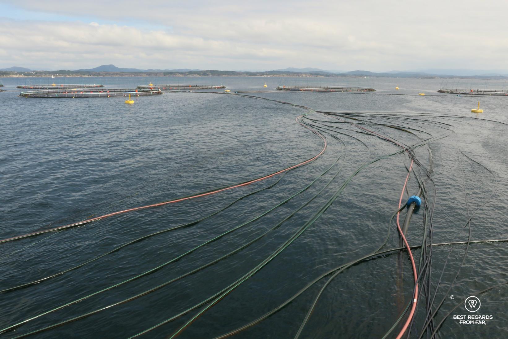 Feed lines in a Leroy salmon farm off Bergen, Norway