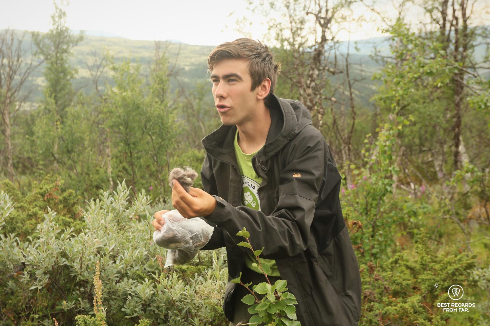 Safari guide showing musk ox hairs