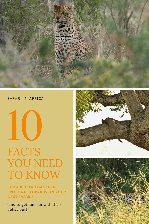 Leopard fact - South Africa - Pinterest PIN